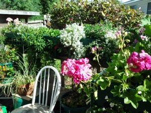 My deck in Aptos CA, where I planted seeds. Now I am focused on planting seeds for my own life path.